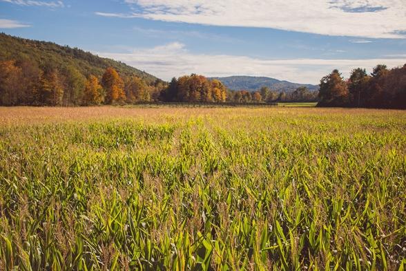 Când va intra în vigoare Legea privind asigurarea subvenționată în agricultură?